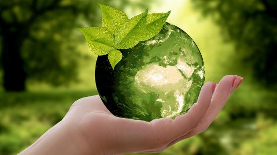 green leaf nature earth